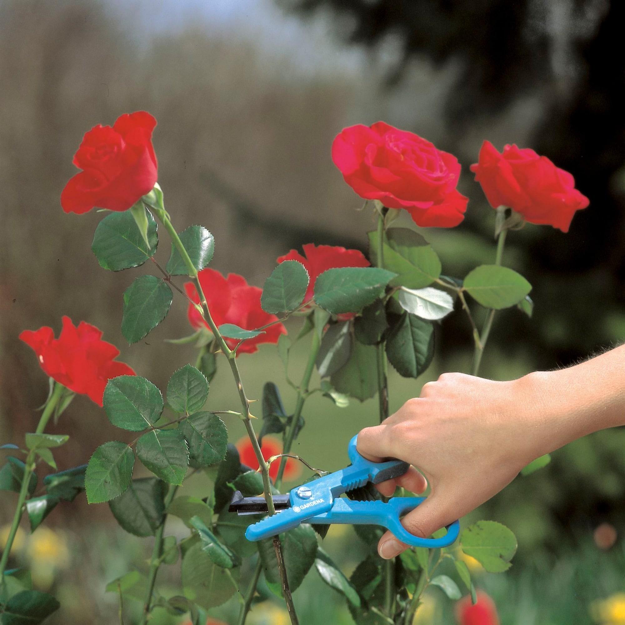Gardena Blumenschere
