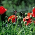 Gardena Regner 6-Flächen-Sprühdüse