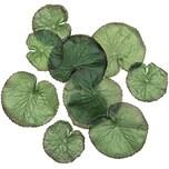 Lotusblätter 24 Stück