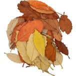 Dekomix Blätter mehrfarbig 60 Stück