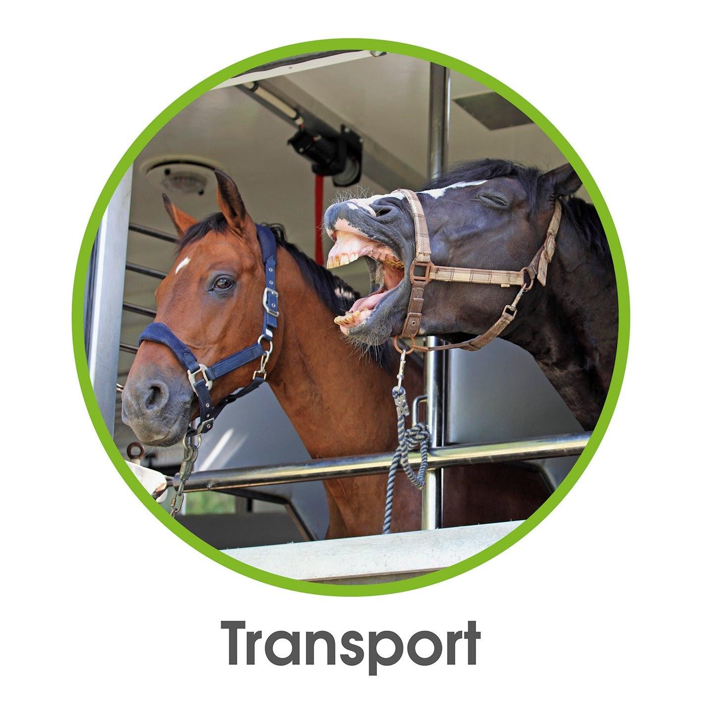Relaxopet Entspannungsgerät Pferd 5V silber/grün