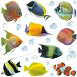 Crearreda Wand Sticker Fische M