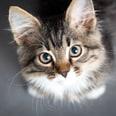 Relaxdays Enthaarungsbogen für Katzen