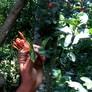 Macis Muskatblüte ganz Bio 100g