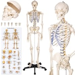 Tectake Anatomieskelett weiß